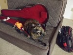 guitar case cat resized.jpg
