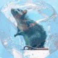 Frozen Rat