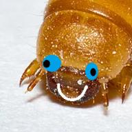 moldymealworm