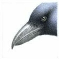 RavenMadd
