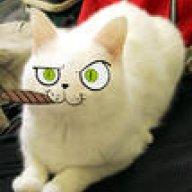 Paul_Cat