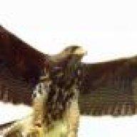 THEBIGOLDDIRTYBIRD