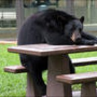 matthew bear