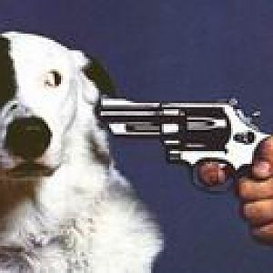 Resize Of Dog And Gun