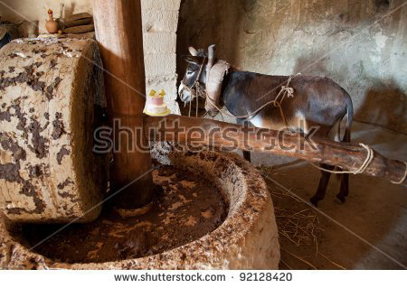 stock photo a donkey powered olive oil press in which the animal drives a heavy stone to crush the oil from 92128420 copy